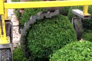 buchsbaum schneidemaschine