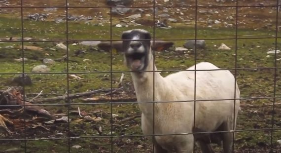 Bon Jovi Goat Remix