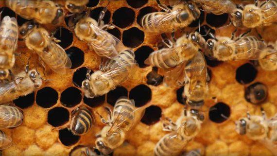 Bienencontainer Crowdfunding