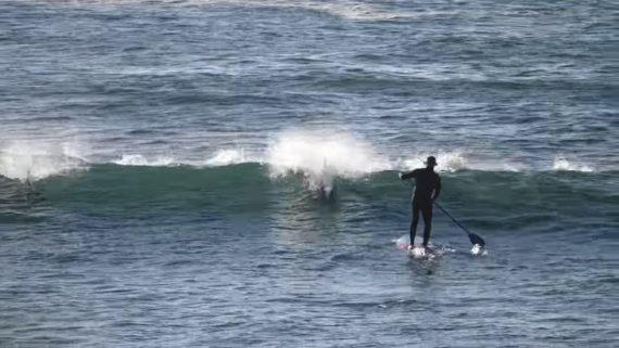 Delfin tackled SUP