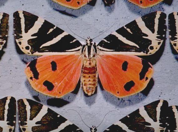 Darwin Insekten Animation