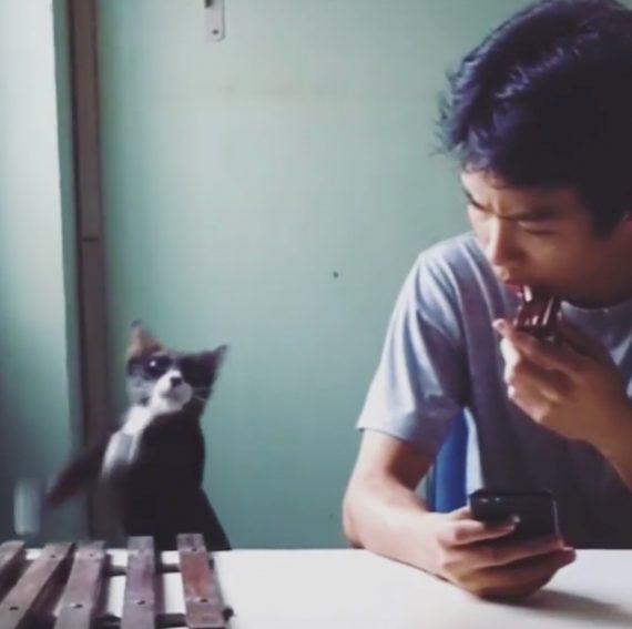 Katze spielt Marimba Klingelton