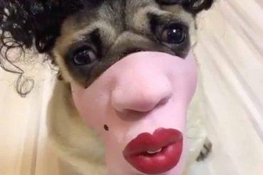 Mops mit Maske