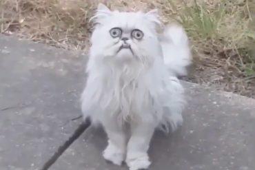 michael rapaport weird cat