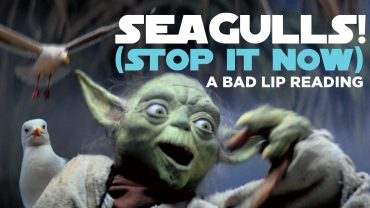 yoda seagulls stop it now