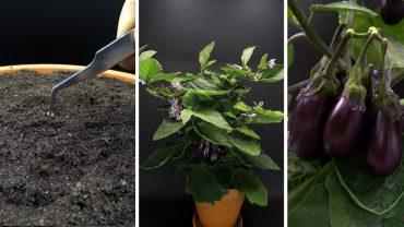 zeitraffer mini aubergine